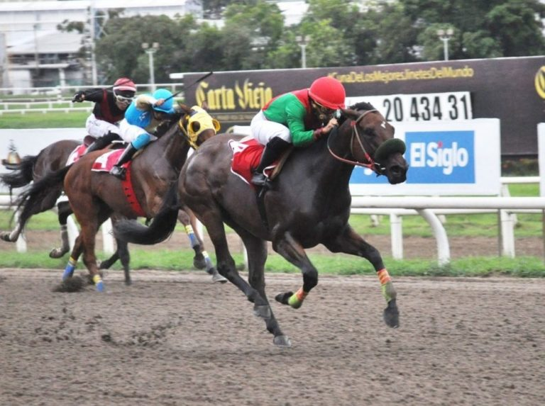 Panamanian horseman is in serious condition after a fall